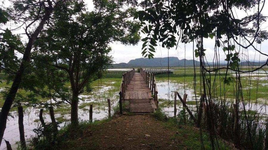 Accès à la lagune du parc Palo Verde - Costa Rica