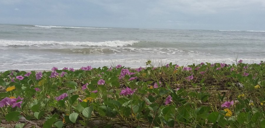 Mer et fleurs - parc de Cahuita (Costa Rica)