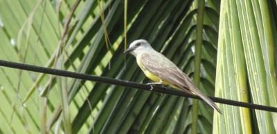 Un oiseau du parc de Cahuita - Costa Rica