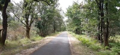 La voie verte entre Hourtin et Lacanau