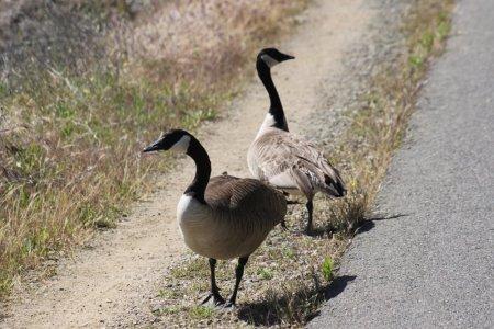 Le lac Natoma - Californie (USA)