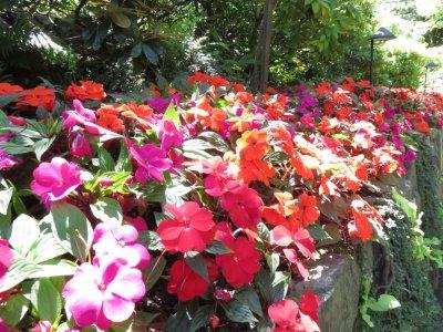 The Butchart Gardens - Victoria (île de Vancouver)
