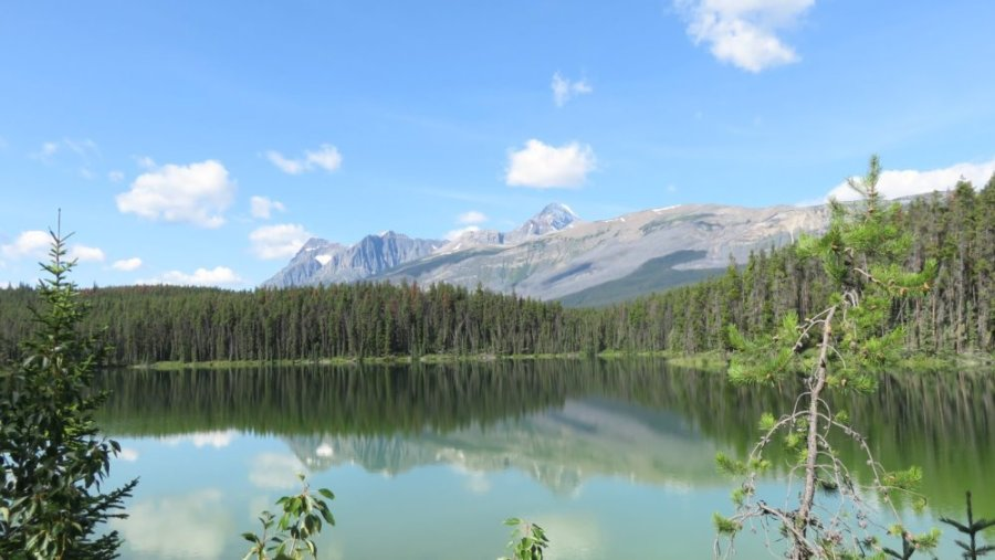 La route des Glaciers - Rocheuses canadiennes