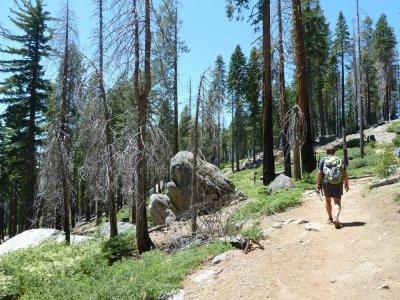 Mariposa Grove - Yosemite NP (Californie)