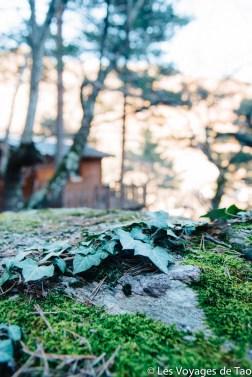 Cabanes dans les arbres Tende-20