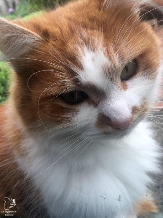 Le chat de mon gardiennage de maison en Australie dans notre article Le house sitting : Le gardiennage de maison pour voyager à faible coût #housesitting #gardiennagedemaison #vacances #voyage #catsitting #voyagerpascher