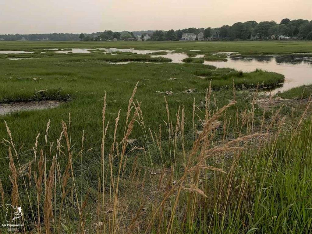 Wildlife reserve, une zone marécageuse à Ogunquit dans le Maine dans notre article Ogunquit dans le Maine : petit guide pour des vacances en famille réussies #ogunquit #maine #usa #etatsunis #plage #famille #vacances