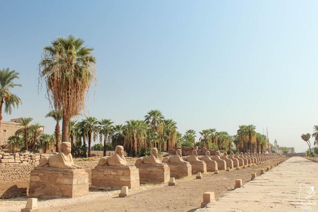 Allée des sphinx au temple de Louxor le long du Nil en Égypte dans notre article Le Nil en Égypte : L'itinéraire de mon voyage sur le Nil en train #egypte #nil #afrique #train #voyage #louxor