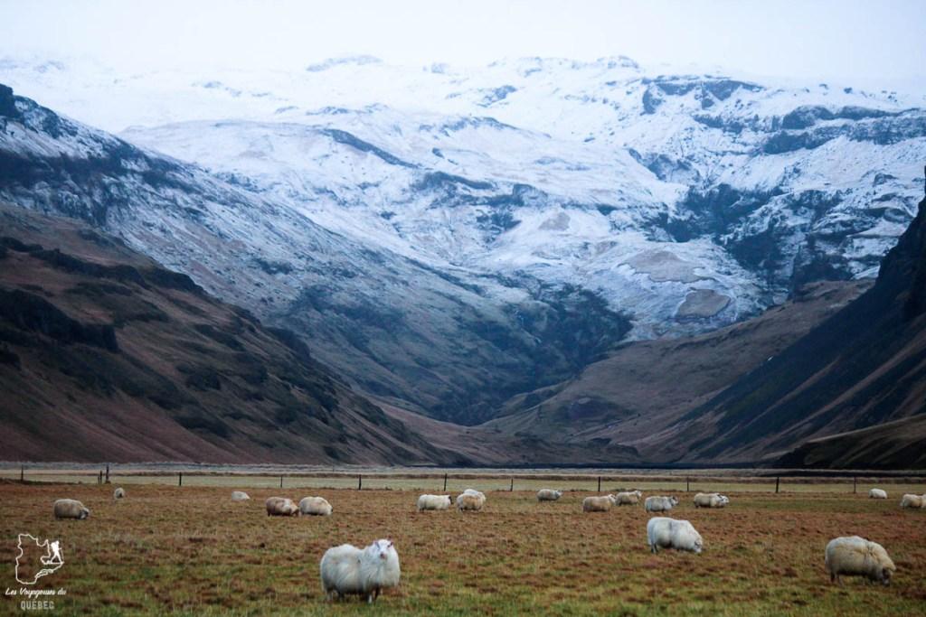 Paysages d'Islande dans notre article Visiter l'Islande : quoi faire et voir en 4 jours seulement #islande #europe #voyage