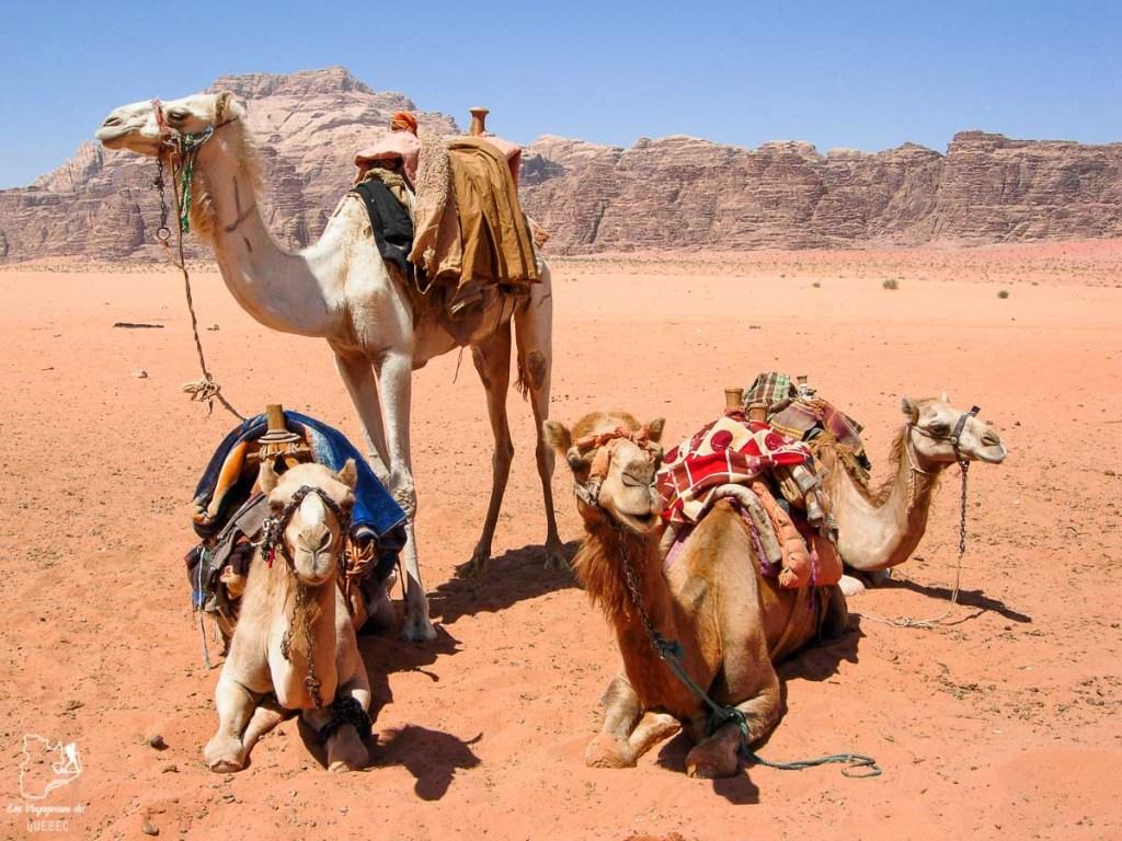Randonnée en chameaux dans Désert du Wadi Rum dans notre article Déserts du monde : L'expérience mystique du Sahara, Thar et Wadi Rum #deserts #desert #sahara #thar #wadirum #voyage