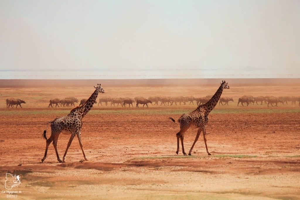 Safari au Kenya et en Tanzanie : comment l'organiser et s'y préparer #kenya #tanzanie #safari #afrique #voyage