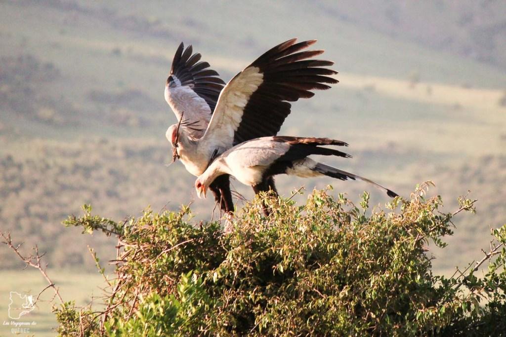 Aigles dans un safari en Tanzanie dans notre article Safari au Kenya et en Tanzanie : comment l'organiser et s'y préparer #kenya #tanzanie #safari #afrique #voyage