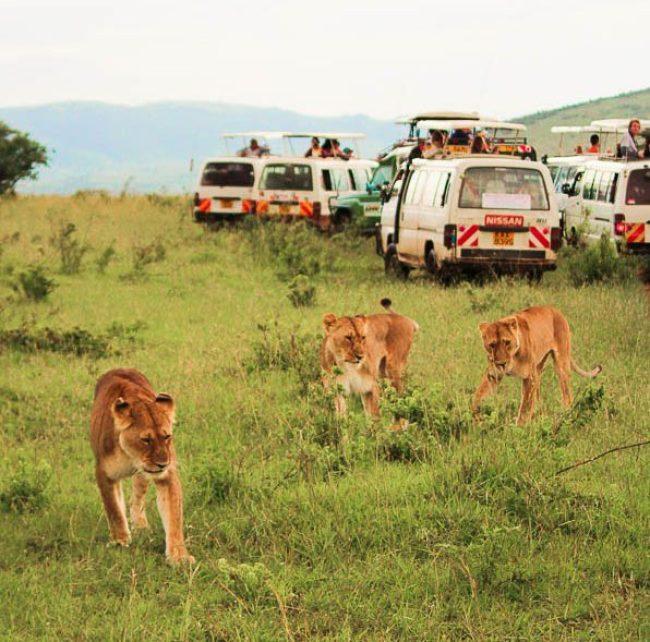 Voyage organisé de safari en Kenya dans notre article Safari au Kenya et en Tanzanie : comment l'organiser et s'y préparer #kenya #tanzanie #safari #afrique #voyage