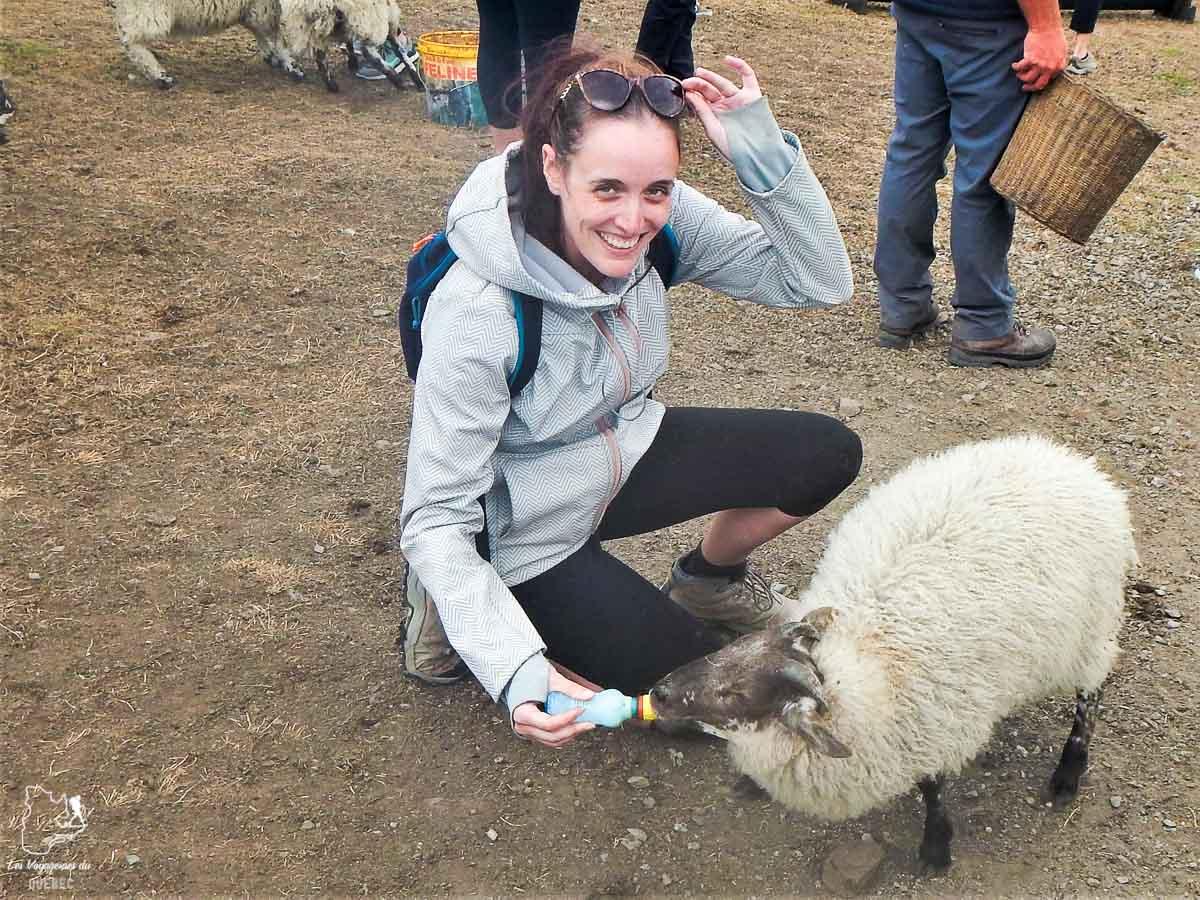 Visiter une ferme de moutons en Irlande dans notre article Road trip en Irlande : 3 semaines de road trip en couple à travers l'Irlande #irlande #irlandedunord #roadtrip #circuit #europe #voyage