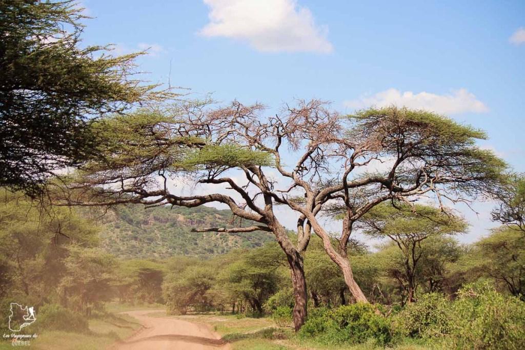 La savane africaine dans notre article Safari au Kenya et en Tanzanie : comment l'organiser et s'y préparer #kenya #tanzanie #safari #afrique #voyage
