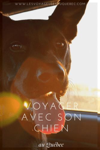 Voyager avec son chien au Québec : Trucs, astuces et itinéraires