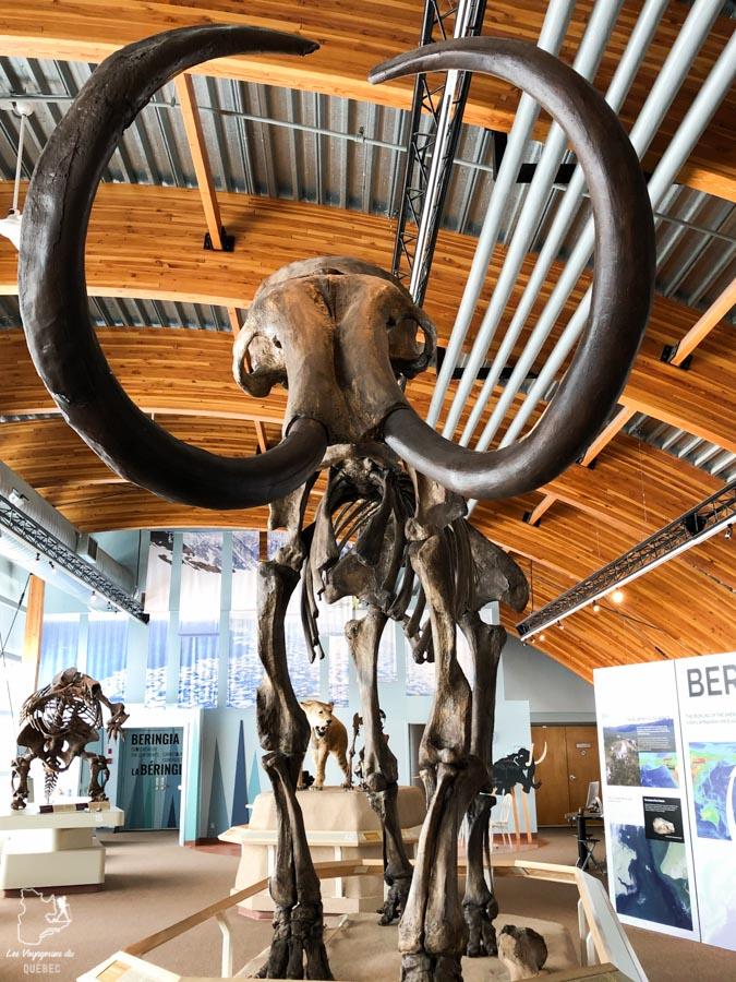 Visite du musée de la Béringie à Whitehorse dans notre article Visiter le Yukon en hiver : quoi faire au Yukon durant la saison hivernale #yukon #hiver #canada #voyage