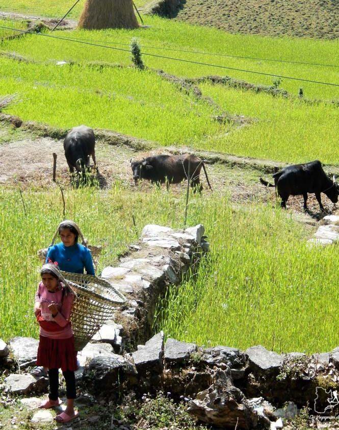 Le Népal, une destination pour voyager en tant que femme dans notre article Voyager en tant que femme : 10 destinations coups de coeur pour voyageuses #destination #femme #voyager #voyage #solo #voyageuse