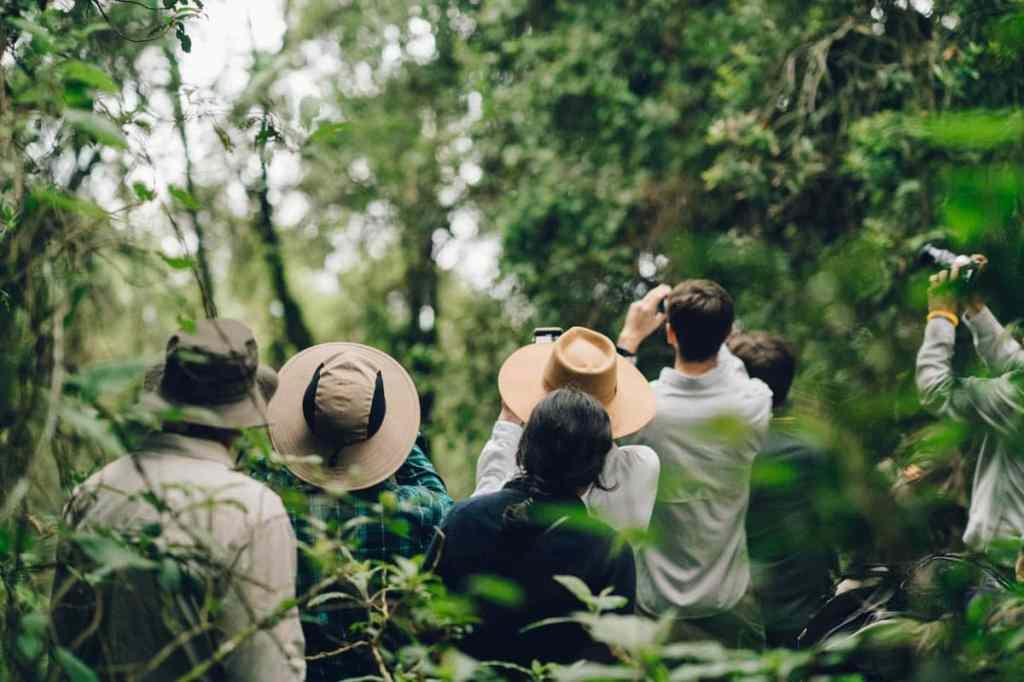 Observation des gorilles de montagne en Ouganda à la Bwindi impenetrable forest #ouganda #gorille #singe #afrique #voyage #safari