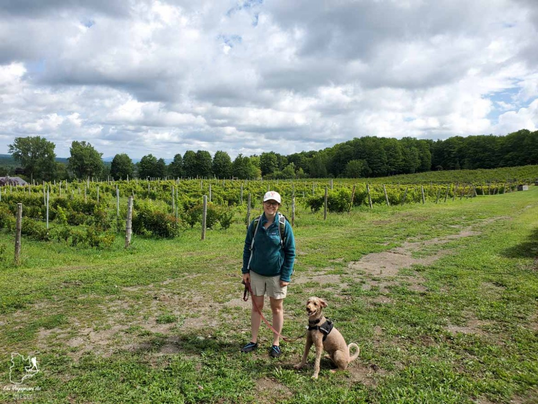 Visite du vignoble Domaine des Côtes d'Ardoiseà Dunham avec mon chien dans notre article Quoi faire en Estrie avec son chien : mon itinéraire pour visiter l'Estrie avec Pitou #estrie #cantonsdelest #quebec #bonjourquebec #canada #chien #roadtrip