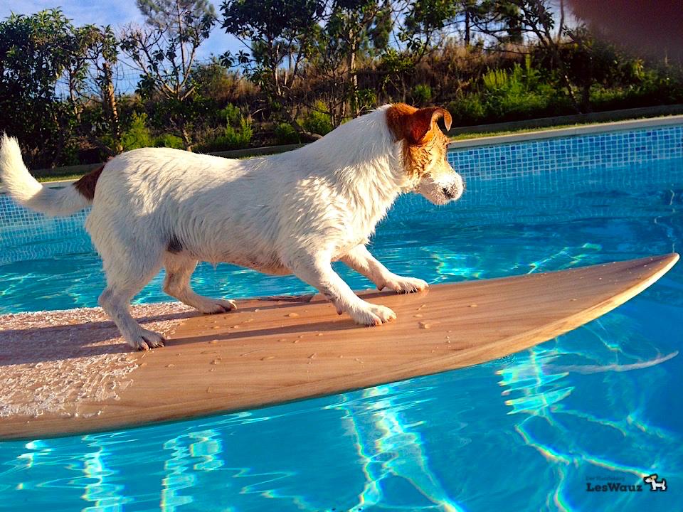 Surfboard baden