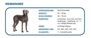 Hunde DNA Test4