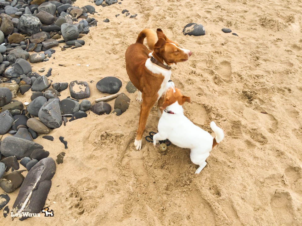 Hund-Pixie-am-Strand-Port2