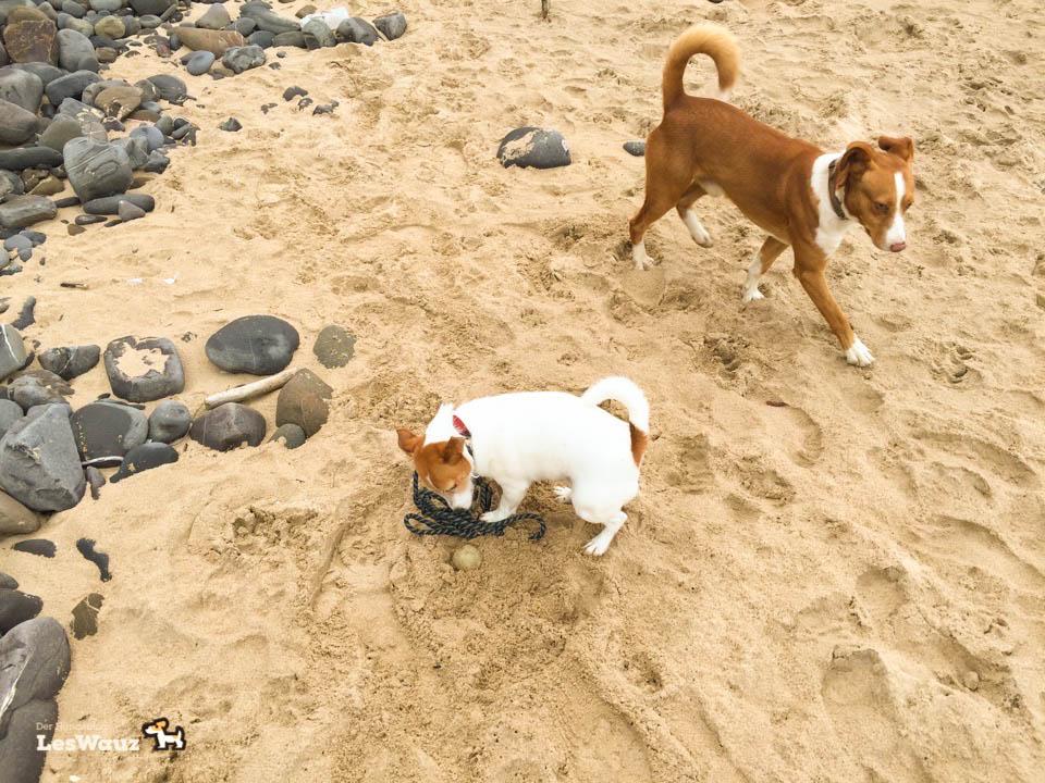 Hund-Pixie-am-Strand-Port