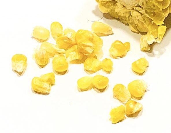 L'ingrédient invité-Le maïs