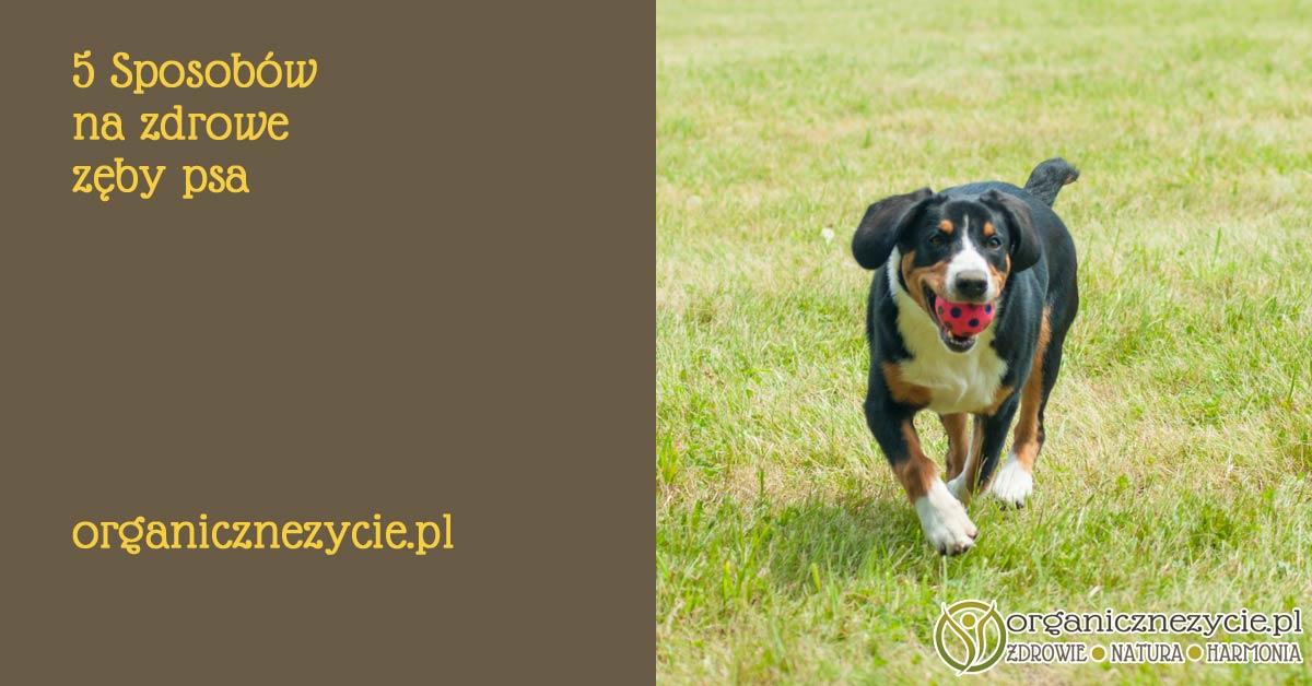 5 sposobów na zdrowe zęby psa