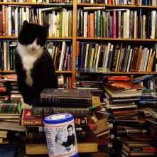 Voltaire-Rousseau-Cat