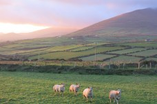 Péninsule de Dingle, County Kerry, 16 novembre 2014, 16:29