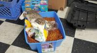 floodcat1
