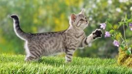 Garden-Outdoor-Cat