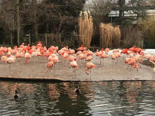 lac avec flamants rose, zoo de Prague.