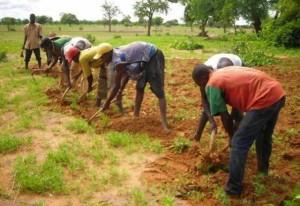 rp_Agriculteurs-traditionnels-300×206.jpg