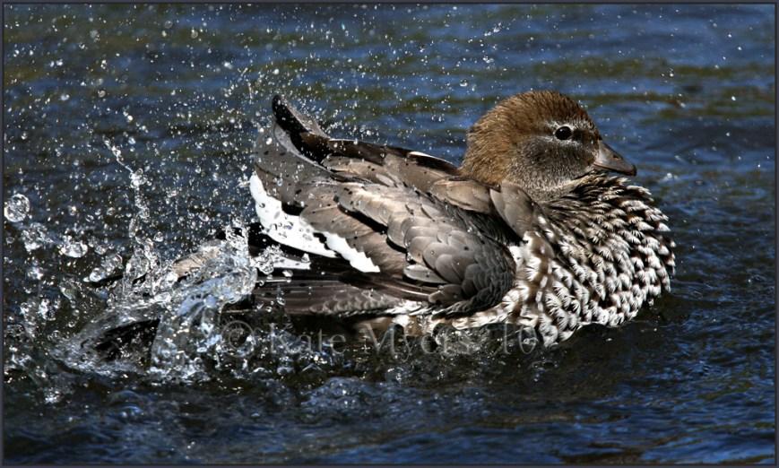 Splashing About