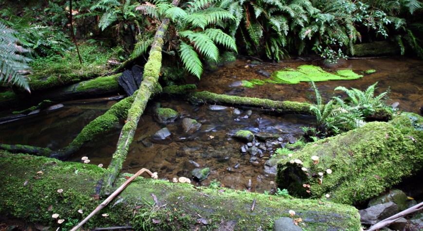 Beauchamp-Falls-walk