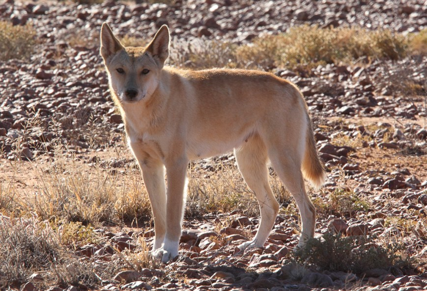 Curious-Dingo
