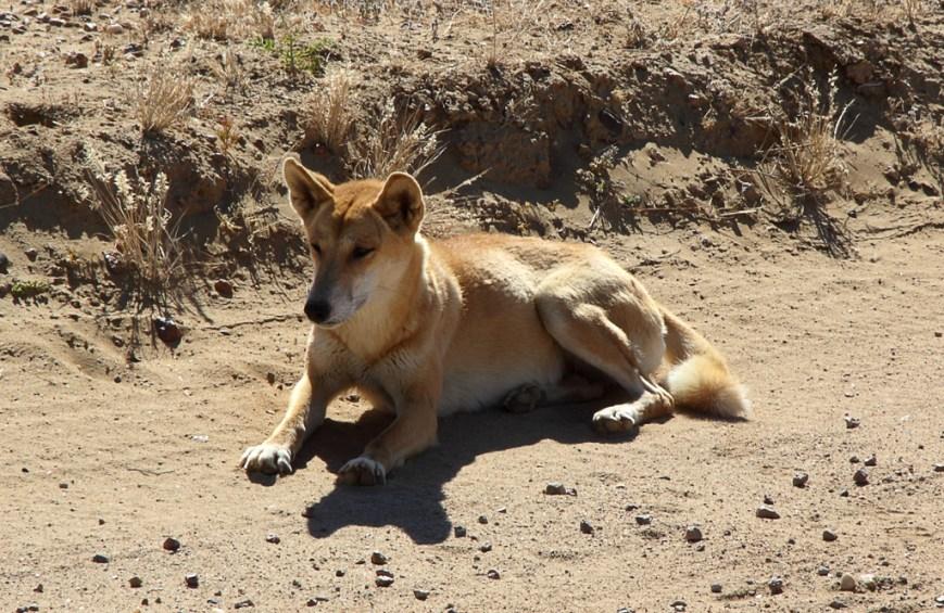 Friendly-Dingo