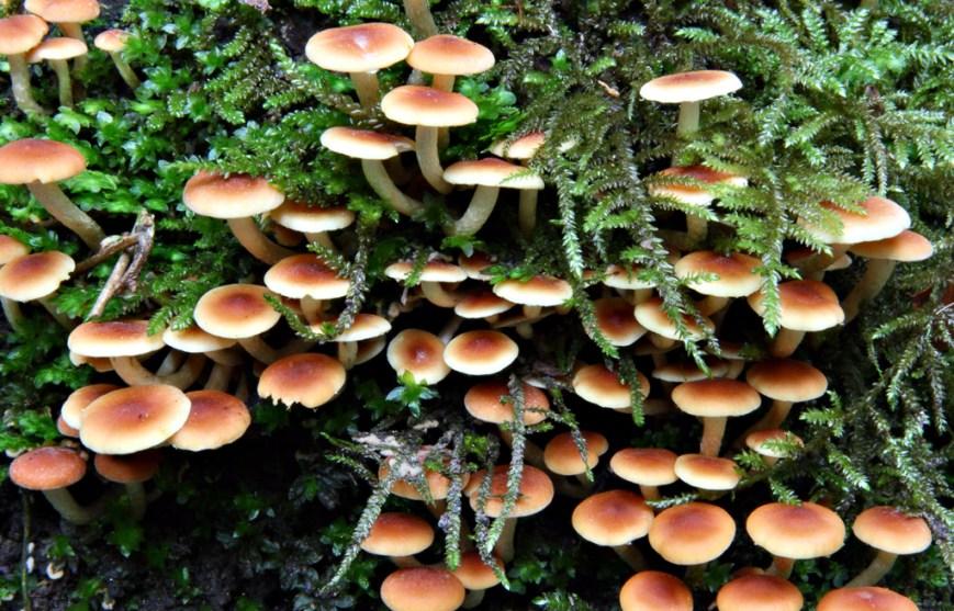 Fungi-3