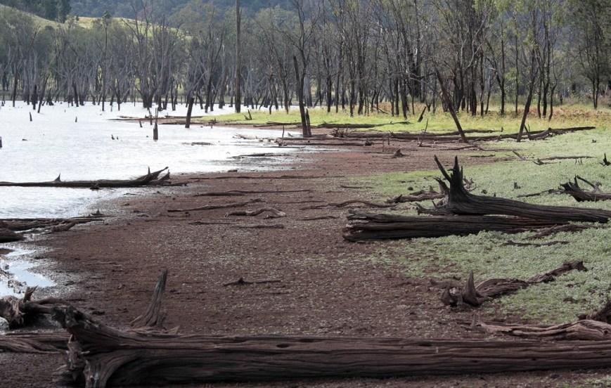 Nuga-Nuga-dead-Trees