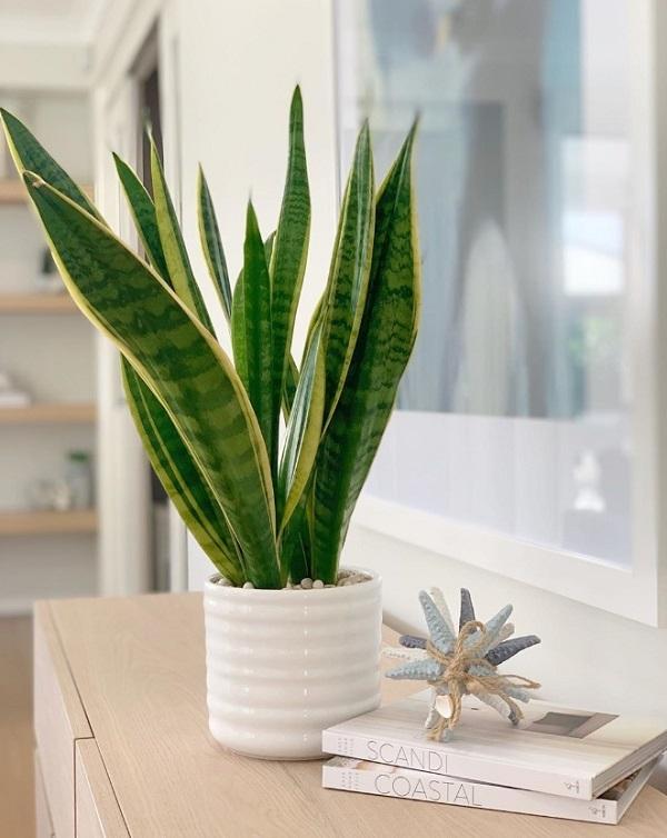室內植物推薦