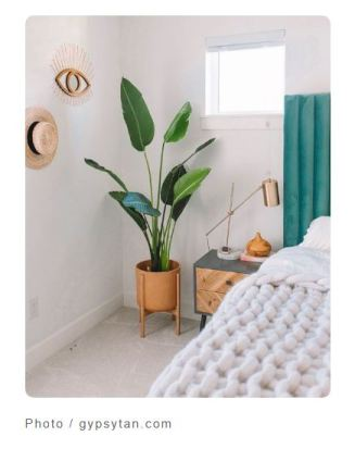 大型室內植物推薦