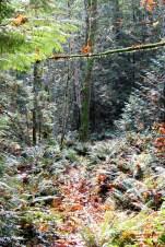 Maples leaves were driffing down like rain