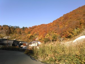 泥湯温泉付近の紅葉