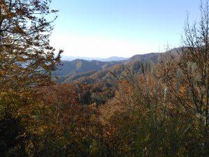栗駒山麓 紅葉