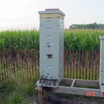 Hive 1101 on 7/6/2012