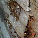 2012-07-28 Bee Cutout 01