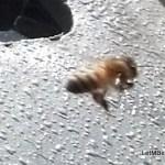 Honey Bee.......